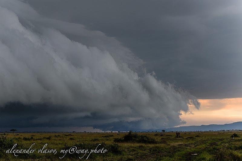 погода в масаи мара