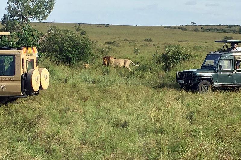 машины на львином сафари в масаи мара