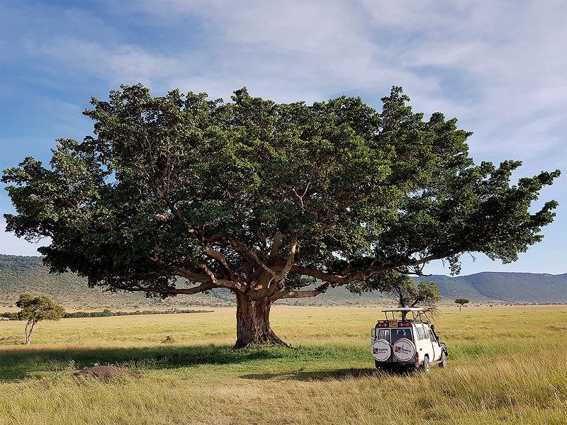 голубую дымку откоса олоололо, его на фоне открытых лугов масаи мара