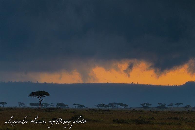 пейзаж в тревожных синих и оранжевых тонах заповедник масаи мара