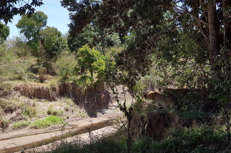по берегам реки мары густо растут деревья и кустарники