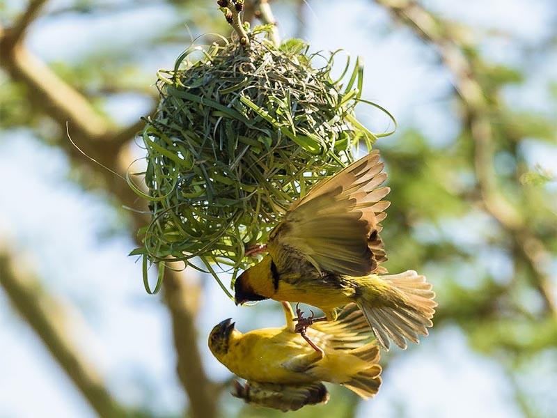 птицы на территории серена лодж в масаи мара