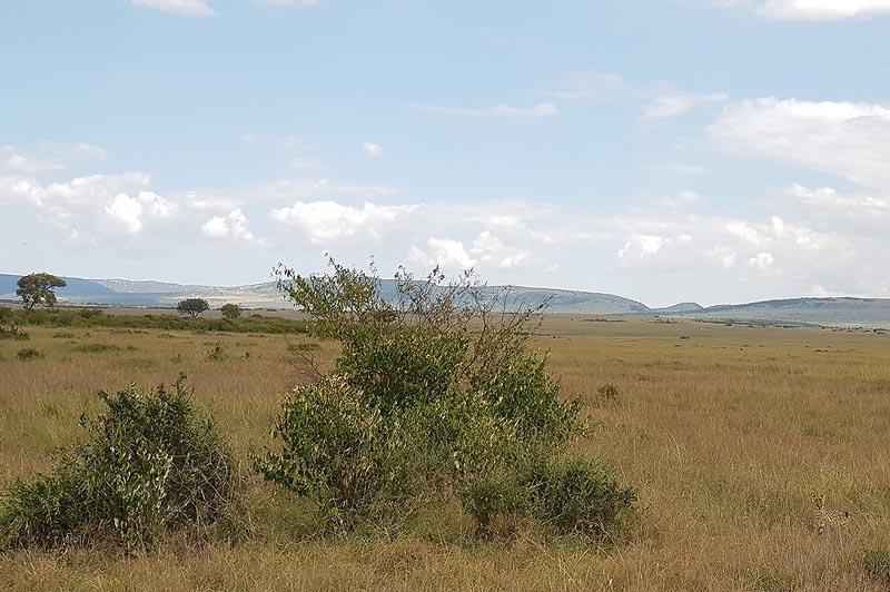 равнина масаи мара классический африканский пейзаж