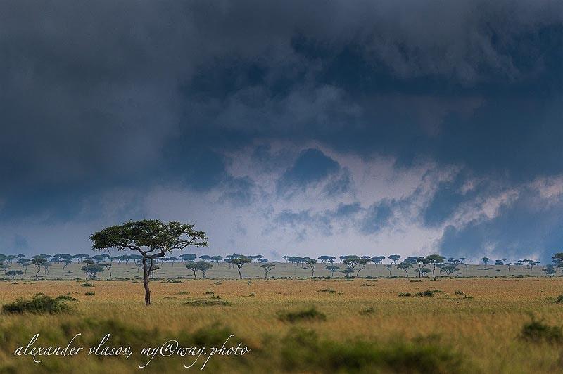 в африканской саванне раздолье для травоядных и хищников