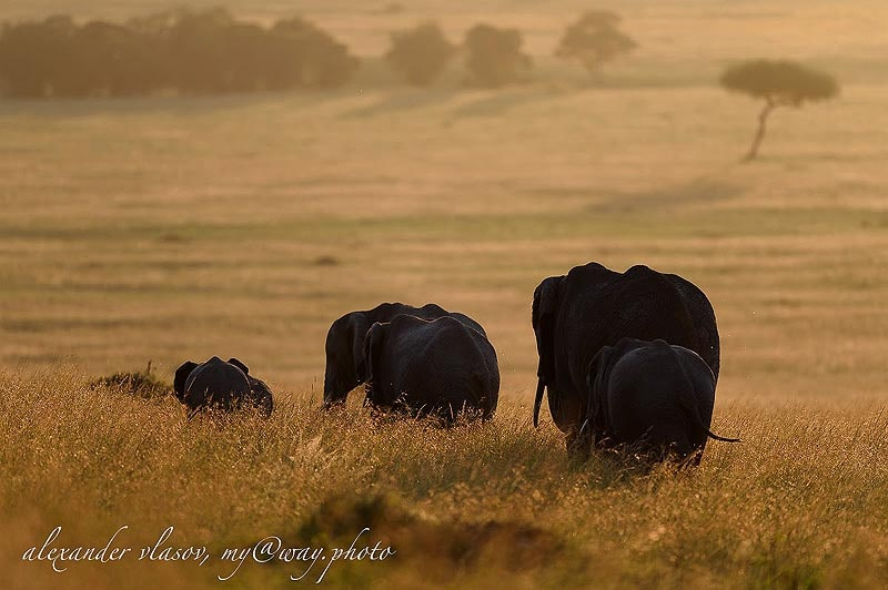 слоновье стадо матери тетушки малыши