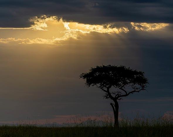 солнечные лучи над открытым африканским ландшафтом масаи мара