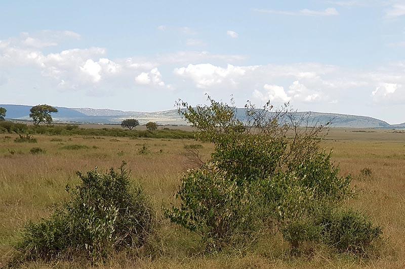 масаи мара территория диких животных