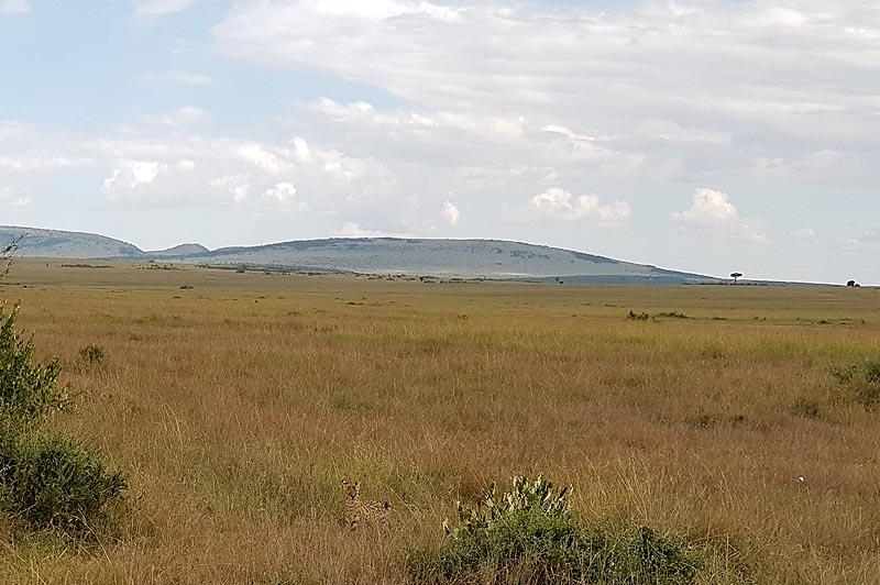 слоновьи места в заповеднике масаи мара