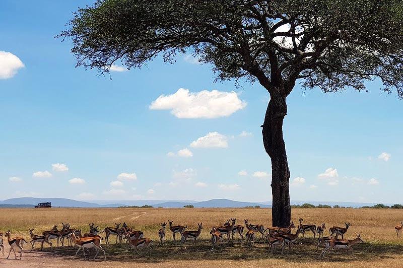 по земле центральной африки