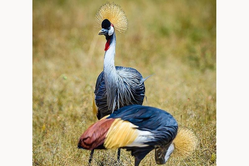 животный мир кении самого привлекательного региона африки