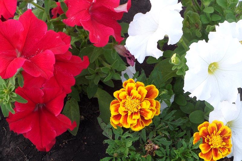 цветочные насаждения в саратове